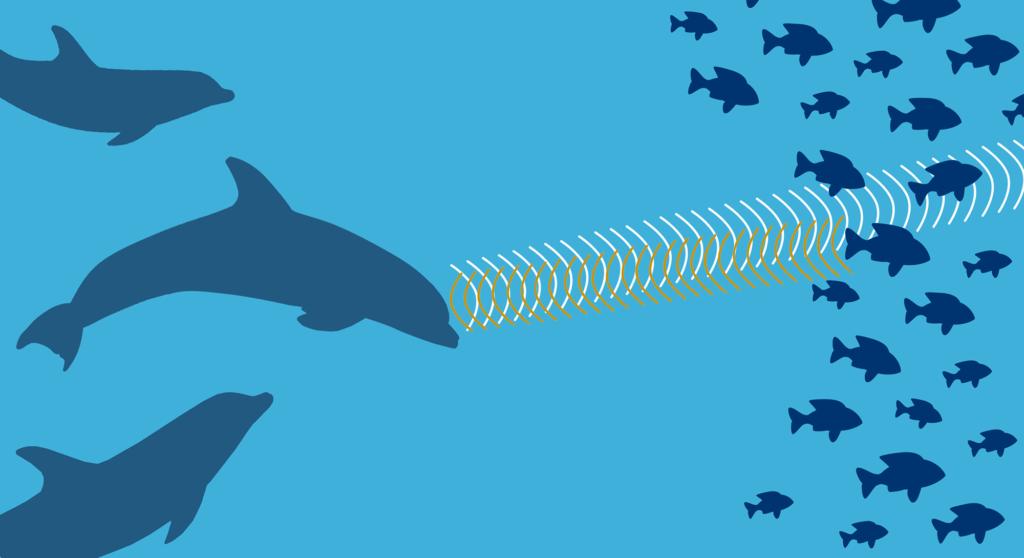 イルカのエコロケーション反響定位