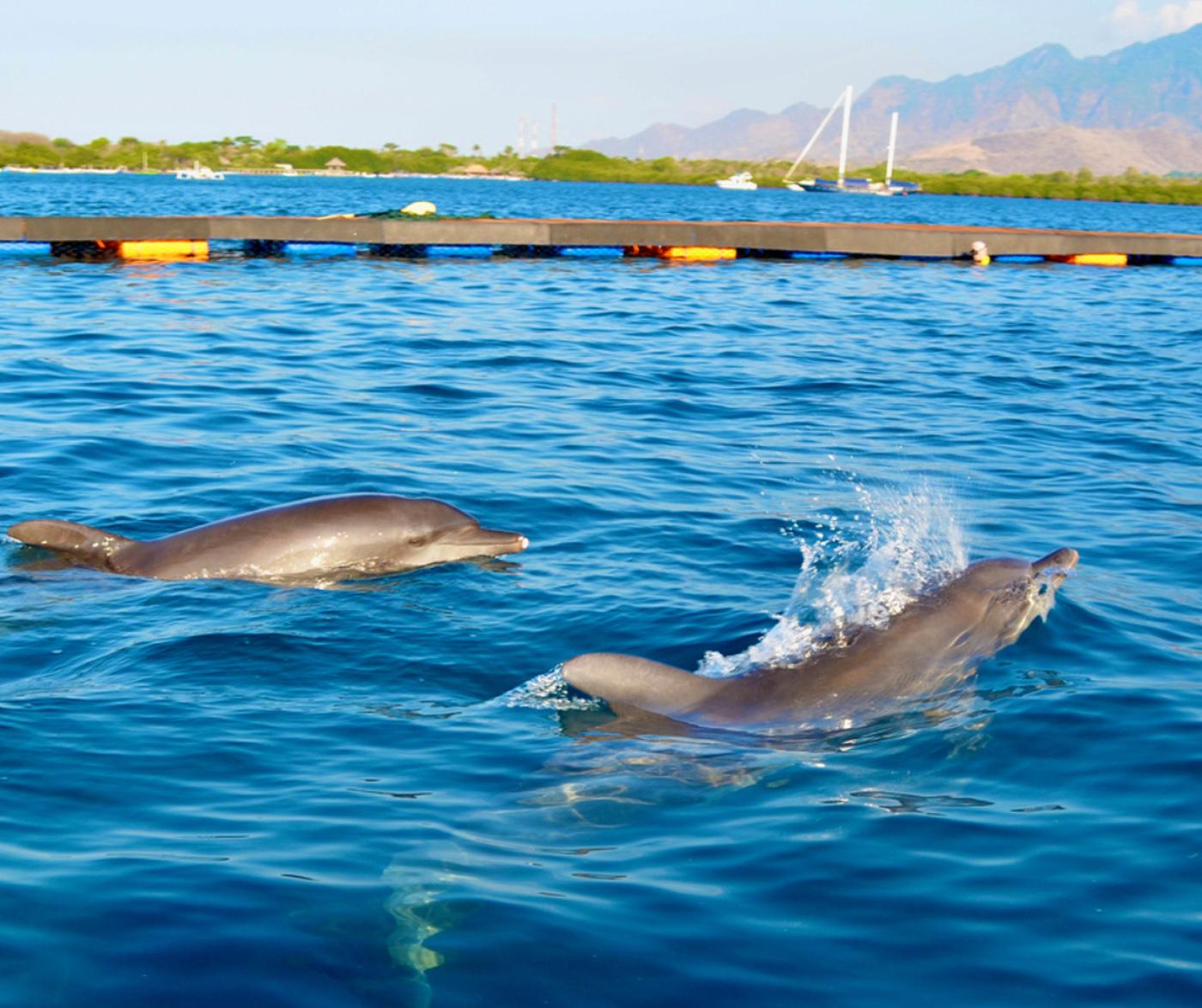 海の自然なリズム、潮汐、潮流、生きた魚の存在などを身に着けることができます