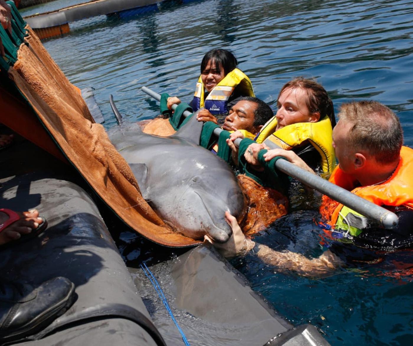 水槽から救助されたイルカ