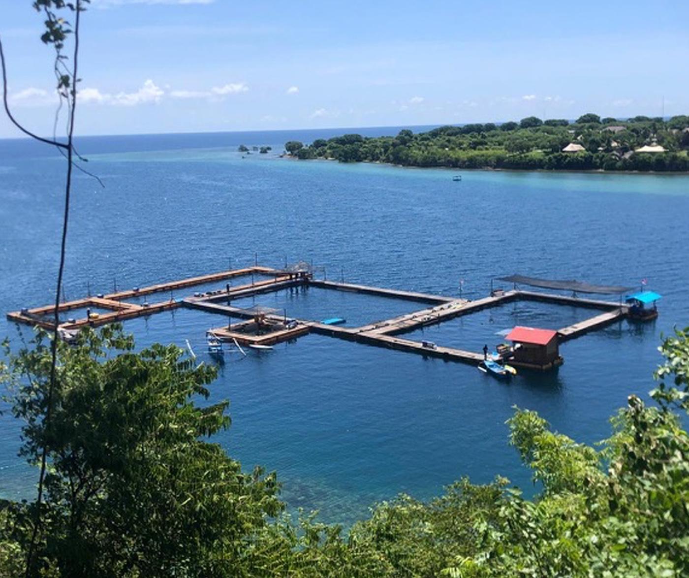 バリ島のイルカサンクチュアリー