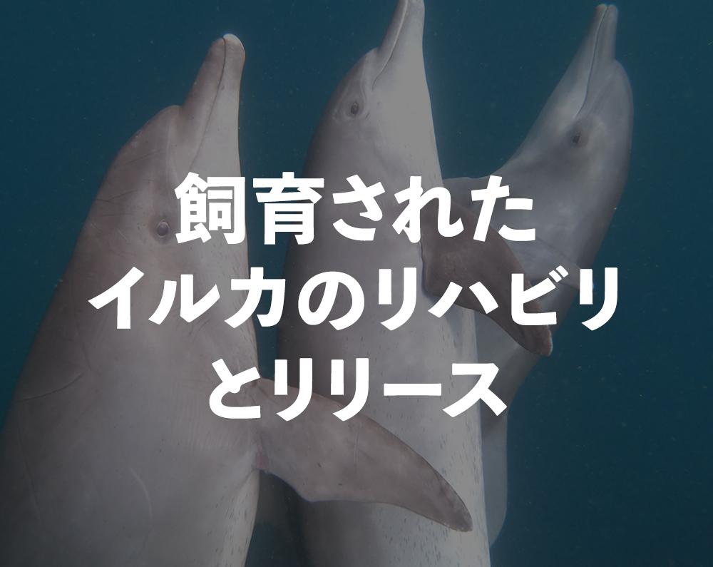 イルカサンクチュアリー ドルフィンプロジェクト