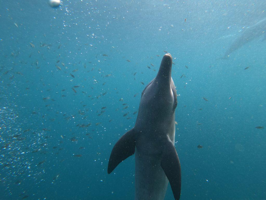 救助されたイルカのロッキー