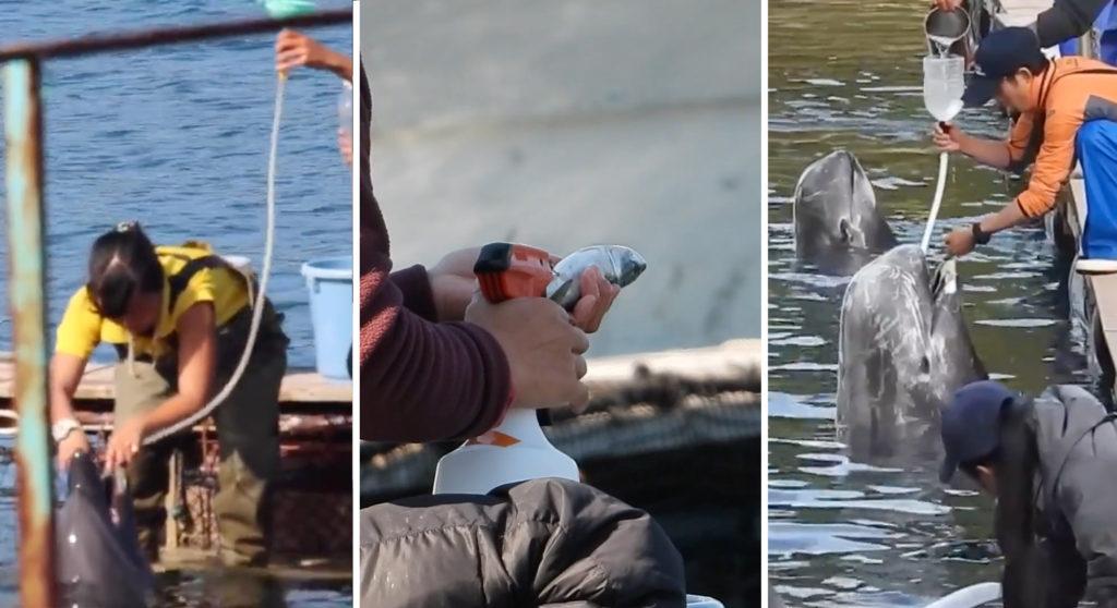 イルカのトレーニングについて