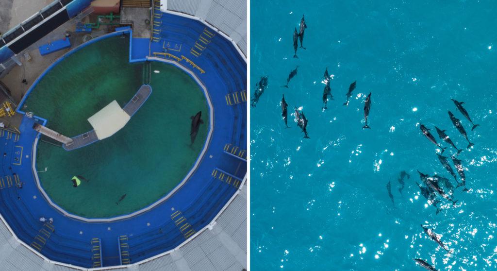 野生のイルカと飼育下のイルカの比べ