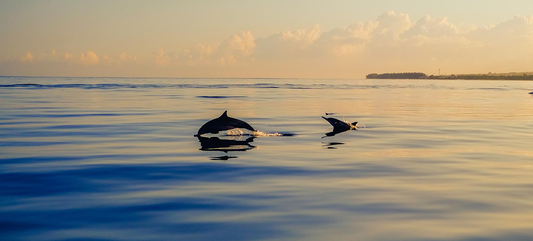 イルカのジャンプ ドルフィンプロジェクト