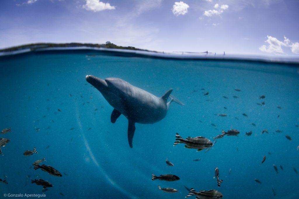 イルカの恒久的なサンクチュアリ ドルフィンプロジェクト