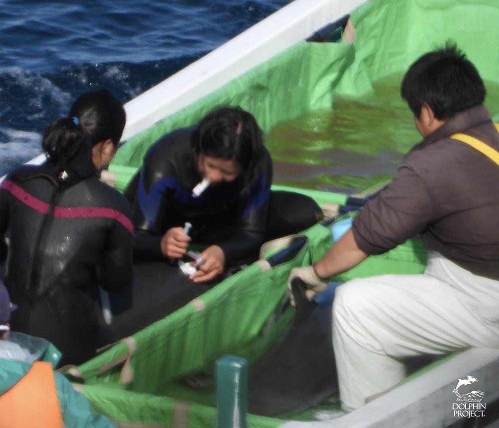 イルカトレーナーが捕獲されたイルカに注射する