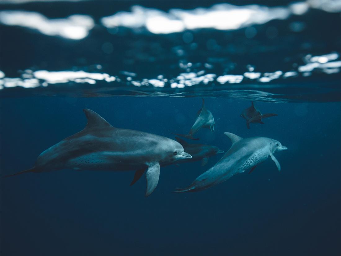 イルカとクジラの文化